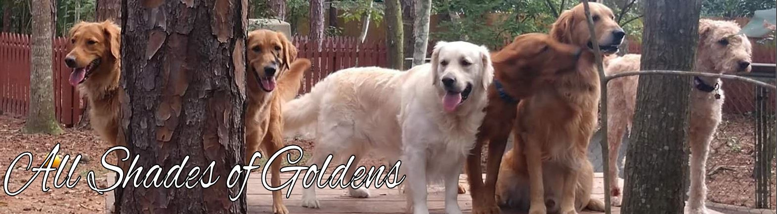 All Shades of Goldens